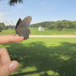 Look for butterflies along the way