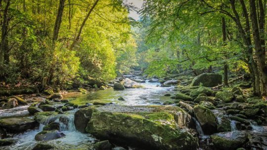 Six Underrated Southern Destinations To Include On A Nature Lover's Road Trip (Forbes Excerpt)