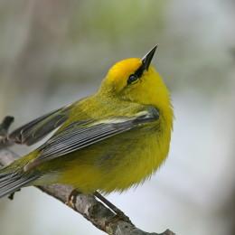 Songbirds can often be heard in the medow