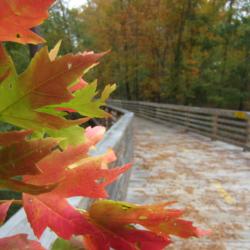 Fall color website