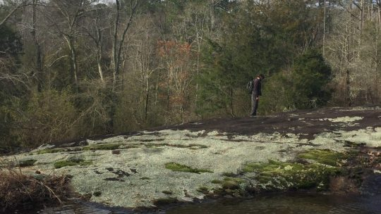 Spring Preview: What's Blooming at Arabia Mountain?