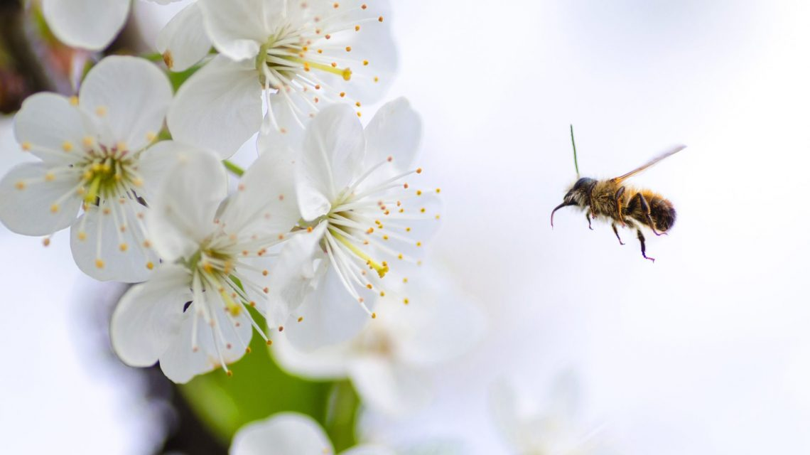 Operation Pollination